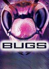 Search netflix Bugs